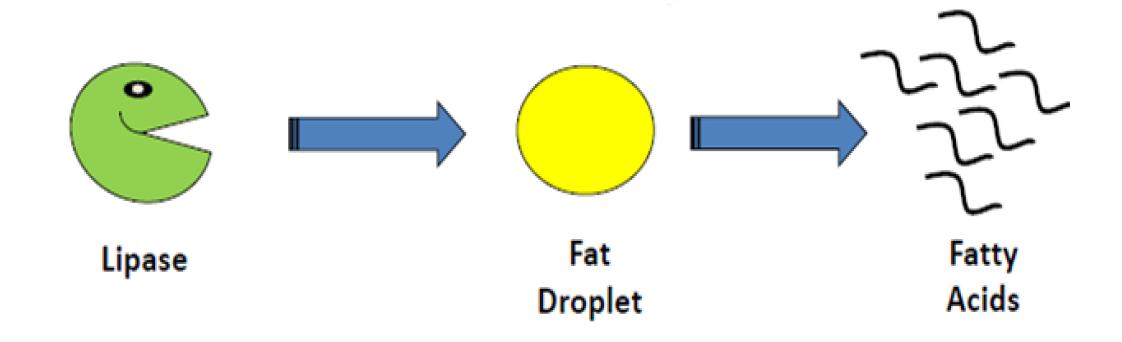 fat-magnet-chart1