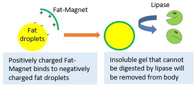 fat-magnet-chart2